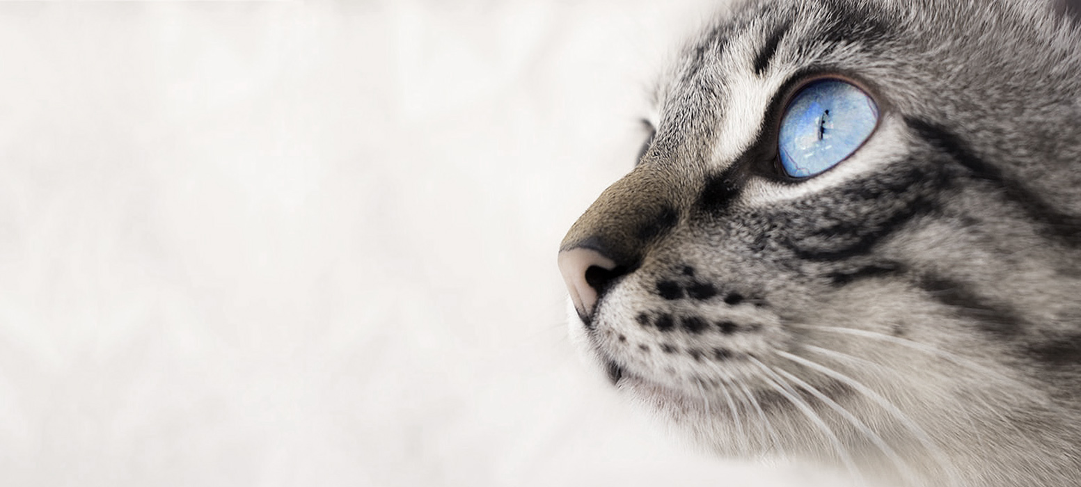 We're Focused on Creating a Better, Healthier World for Cats and their Owners